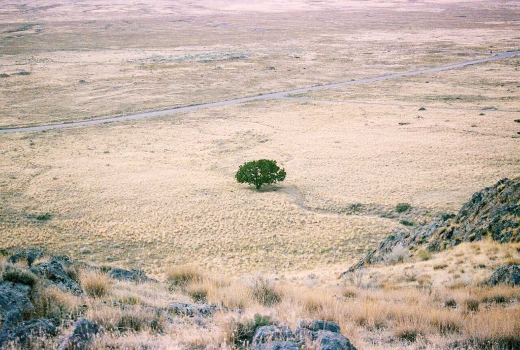 strom v poušti
